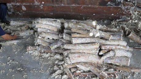 Khoi to hinh su vu van chuyen trai phep gan 900 kg nga voi - Anh 1