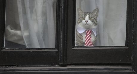 Nguoi dung sau Wikileaks: Chu nao meo nay - Anh 1