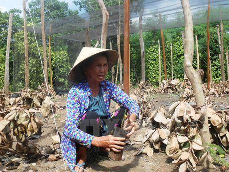 Viet Nam can hon 25.000 ty dong de khac phuc thiet hai do El Nino - Anh 1