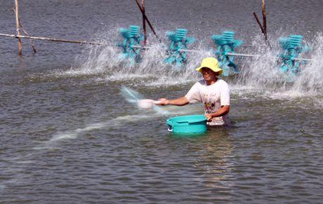 Nganh tom tang canh tranh bang san xuat sach - Anh 1