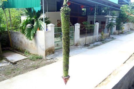 Buong chuoi 100 nai van chua dung tro hoa - Anh 4