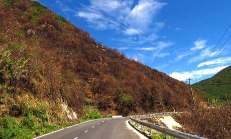 Tro trui rung Nam Hai Van - Anh 1