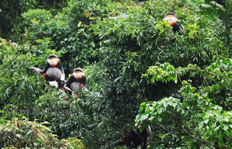 Tro trui rung Nam Hai Van - Anh 2