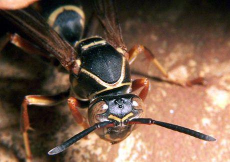 Nu giao vien nguy kich vi bi ong vo ve dot gan 100 mui - Anh 1