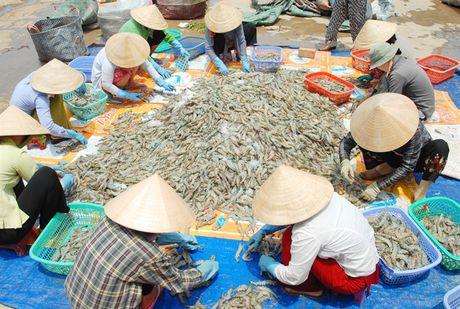 Nang loi the canh tranh cho tom Viet Nam - Anh 2