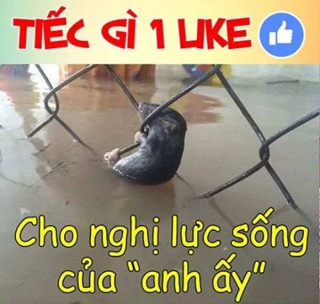 Ro anh che Sai Gon ngap trong trieu cuong - Anh 6
