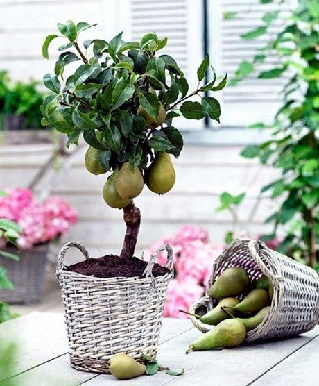 Chiem nguong chau bonsai tu cay an qua cuc doc de trung Tet - Anh 13