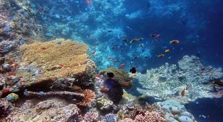 Chuyen di Maldives trong mo cua me don than ung thu va con trai - Anh 10