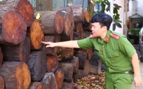 Binh Duong xu phat 150 trieu dong hanh vi van chuyen go quy hiem - Anh 1
