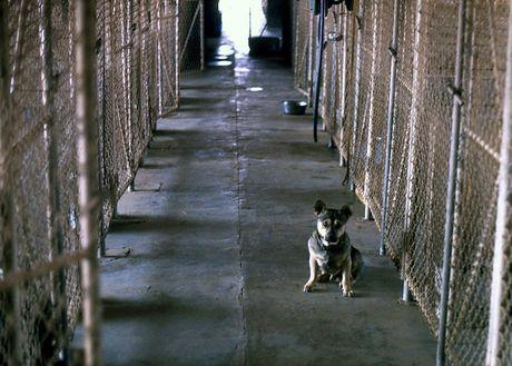 Anh hiem ve cho nghiep vu My thoi chien tranh Viet Nam - Anh 3
