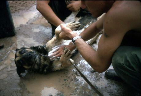 Anh hiem ve cho nghiep vu My thoi chien tranh Viet Nam - Anh 5