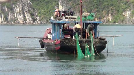 Lum xum viec nhu da trong hang dong vinh Ha Long bi tan pha - Anh 11