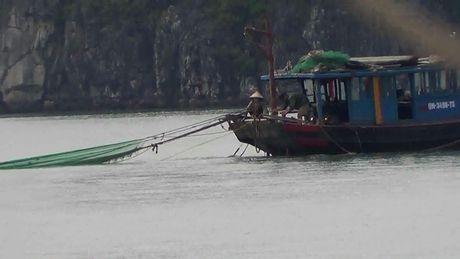 Lum xum viec nhu da trong hang dong vinh Ha Long bi tan pha - Anh 9