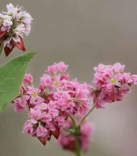 Ky thuat trong hoa tam giac mach lung linh nhu o vung cao Tay Bac - Anh 2