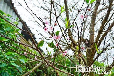 'San' may, 'san' dao no som dau dong tren thien duong Ta Xua - Anh 10