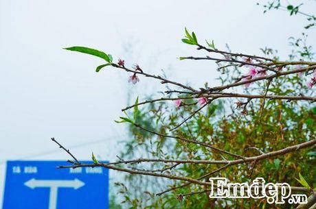 'San' may, 'san' dao no som dau dong tren thien duong Ta Xua - Anh 11