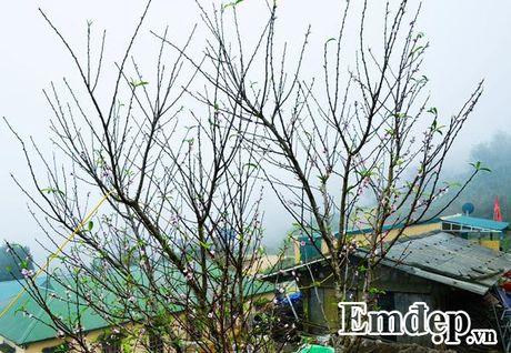 'San' may, 'san' dao no som dau dong tren thien duong Ta Xua - Anh 8