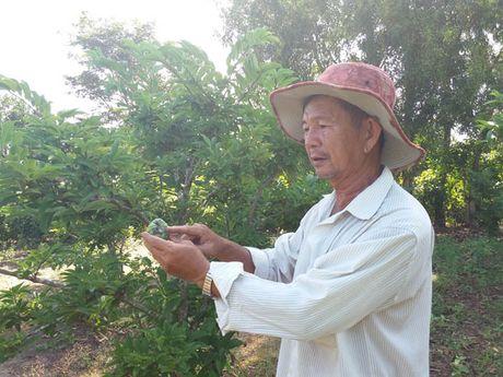 Mat mua mang cau phuc vu Tet Nguyen dan - Anh 1