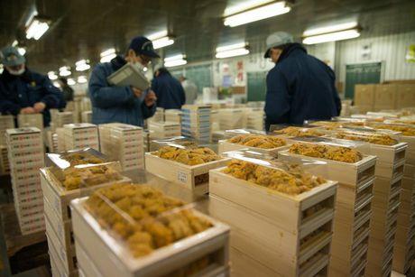 """Ngui """"mui di san"""" trong """"Tsukiji Wonderland"""" - Anh 4"""