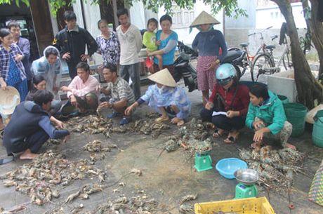 Phu Yen: Nguoi nuoi trong thuy san dieu dung sau lu du - Anh 1
