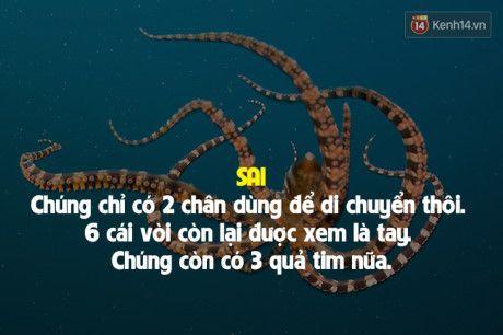 7 su that doi thuong sai bet nhung ai cung cho la dung - Anh 5