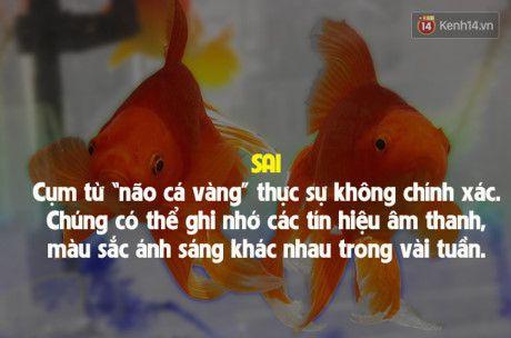 7 su that doi thuong sai bet nhung ai cung cho la dung - Anh 7