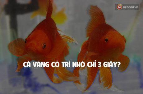 7 su that doi thuong sai bet nhung ai cung cho la dung - Anh 8