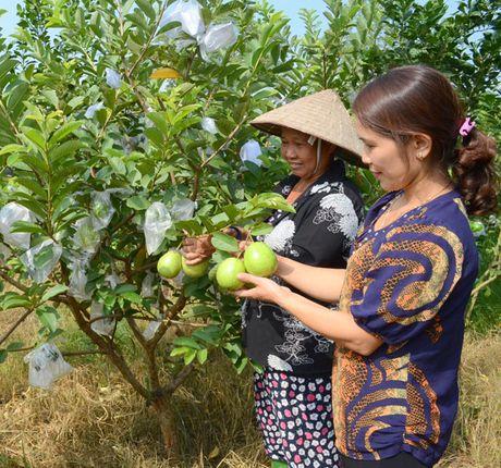 Tuyen Quang xay dung vung cay an qua hang hoa - Anh 1