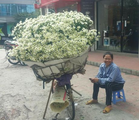 Cuc hoa mi xuong pho gia re bat ngo - Anh 2