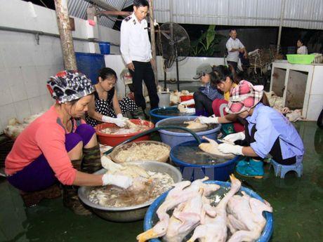Canh bao nguy co lay lan dich benh tren vat nuoi dip Tet Nguyen dan - Anh 1
