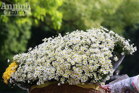 Say long hinh anh thieu nu Ha Thanh diu dang ben cuc hoa mi - Anh 1