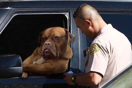Chu cho lai xe tai khoi mao cuoc chien photoshop - Anh 2
