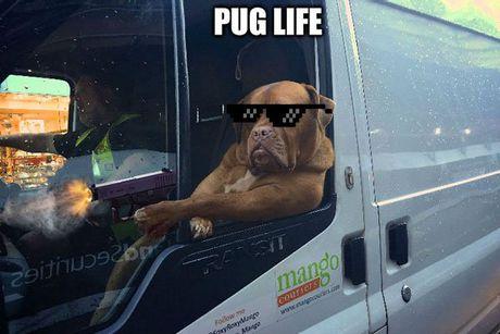 Chu cho lai xe tai khoi mao cuoc chien photoshop - Anh 5