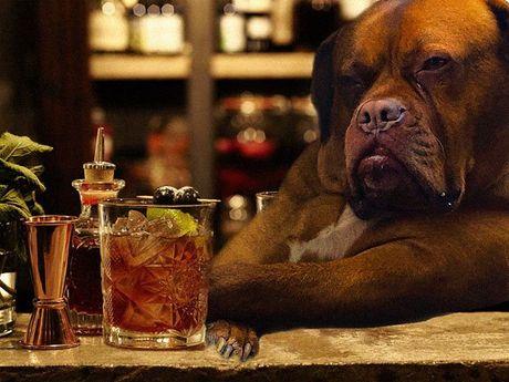 Chu cho lai xe tai khoi mao cuoc chien photoshop - Anh 6