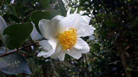 Ngong cho le hoi hoa So vung bien gioi - Anh 1