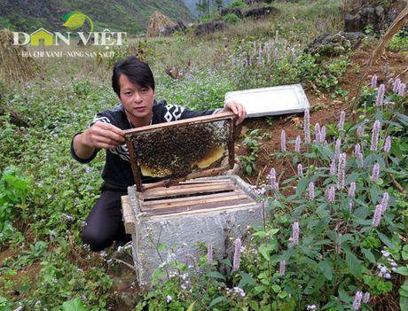 Giu chat luong cho mat ong bac ha Meo Vac - Anh 1
