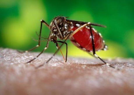 TPHCM: 17/24 quan huyen ghi nhan ca nhiem Zika - Anh 1