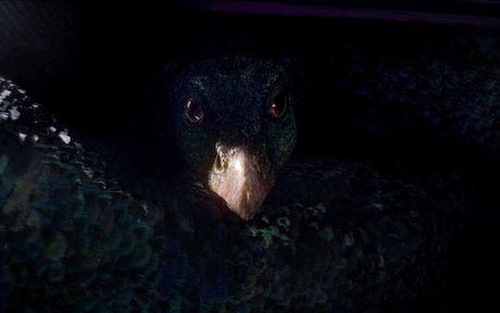 Nhung sinh vat huyen bi lam 'khuynh dao' the gioi cua Fantastic Beasts - Anh 7