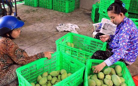 Xoai Dong Thap tieu thu thanh cong khong the thieu lien ket - Anh 1