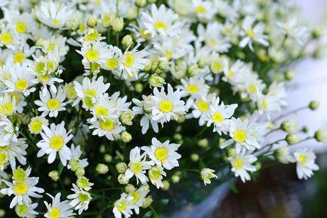 Tac dung bat ngo cua cuc hoa mi voi suc khoe - Anh 4