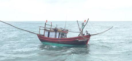Quang Ngai: Tau ca hong may tren bien, 11 ngu dan gap nan - Anh 1