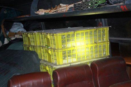 Hanh khach ta hoa vi xe khach cho 120 con ran ho mang tren xe - Anh 1