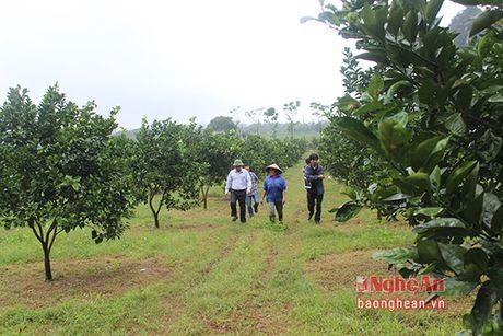 Cam Bai Phu tai xuat - Anh 1