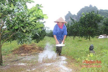 Cam Bai Phu tai xuat - Anh 2