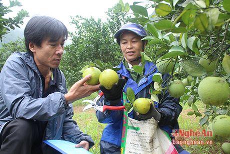 Cam Bai Phu tai xuat - Anh 3