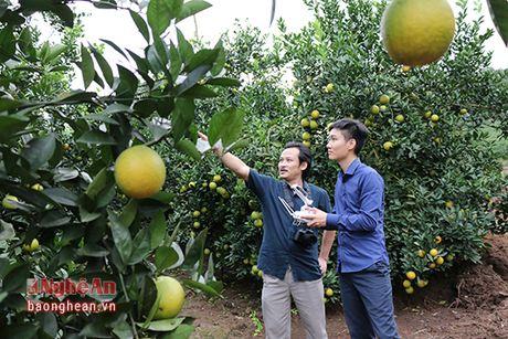 Cam Bai Phu tai xuat - Anh 5