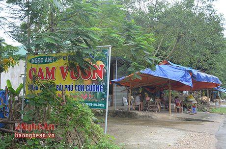 Cam Bai Phu tai xuat - Anh 6