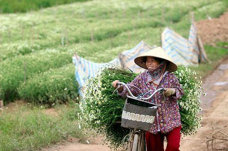 Nam thanh nu tu Ha thanh cuong si cuc hoa mi - Anh 14