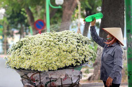Nam thanh nu tu Ha thanh cuong si cuc hoa mi - Anh 15