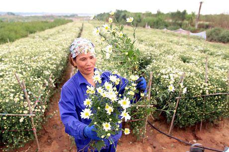 Nam thanh nu tu Ha thanh cuong si cuc hoa mi - Anh 2